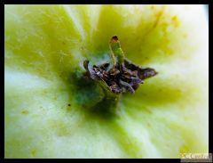 Jabłko 2