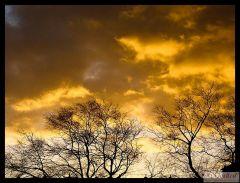 Płonące drzewa